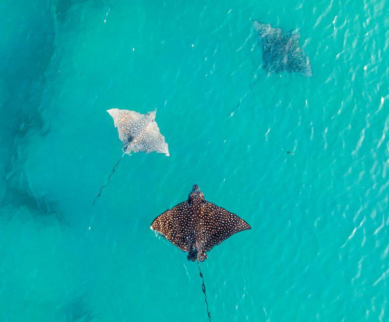Single Fin Photos | Ocean Image Bank